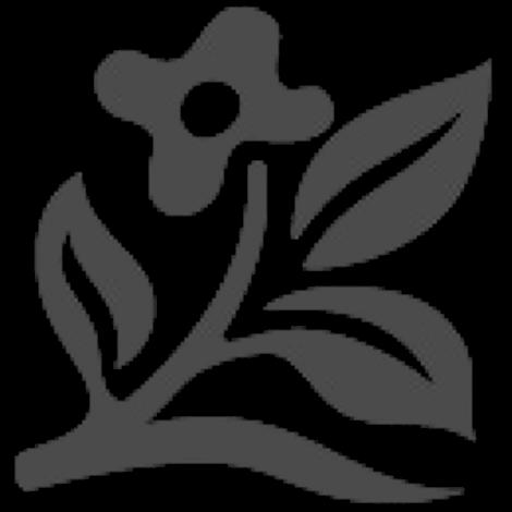 Baby pete lily of the nile medium shot credit doreen wynja izmirmasajfo Images